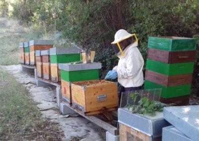 raccolta del miele