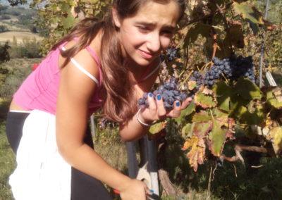 Niky e l'uva